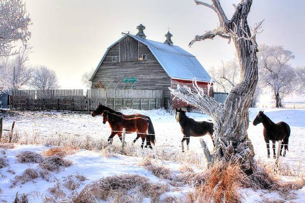 Horses And Barn Poster