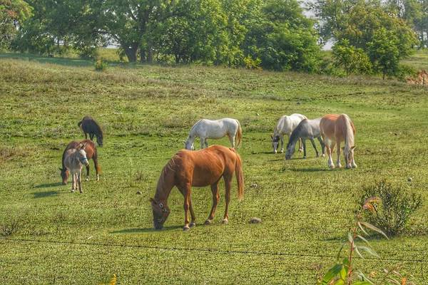1003 - Horses In A Pasture I Poster
