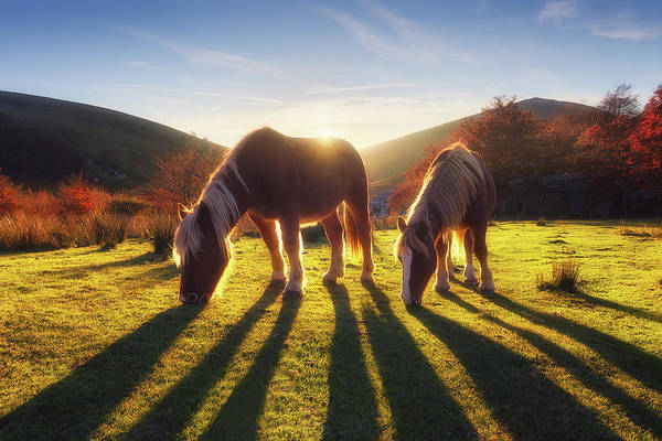Horses In Austigarmin Poster