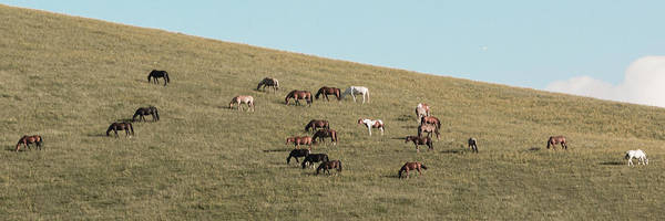 Horses On The Hill Poster