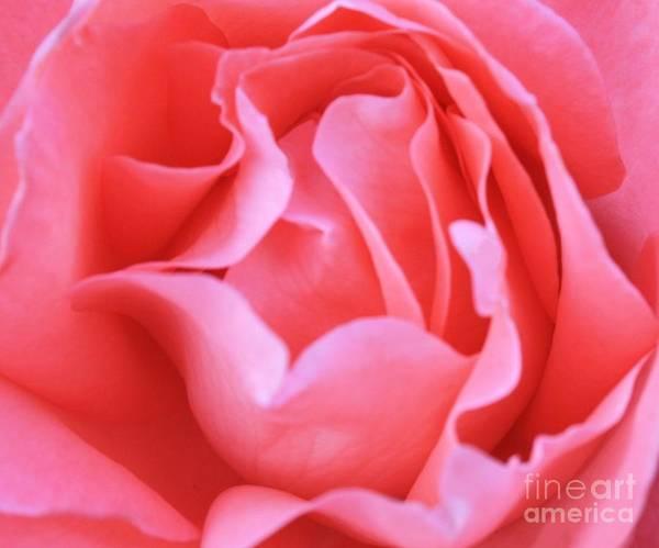 Hot Pink Petals Poster