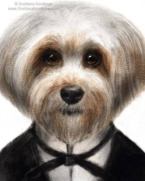 Humorous Dressed Dog Painting By Poster