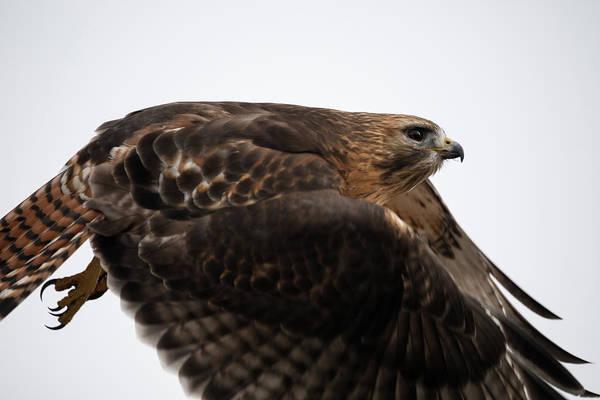 Hybrid Hawk Flyby  Poster