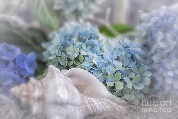 Hydrangeas By The Sea Poster