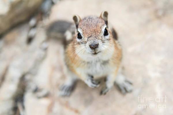 Hypno Squirrel Poster