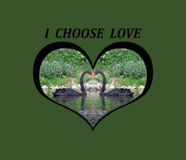 I Chose Love With Black Swans Forming A Heart Poster