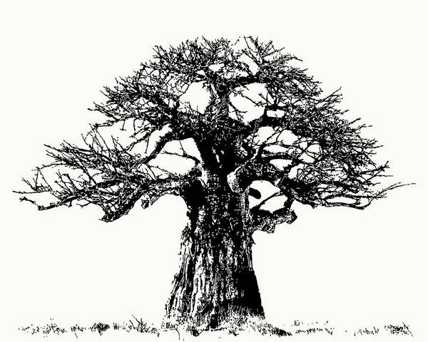 Iconic Baobab Tree In Black And White Poster