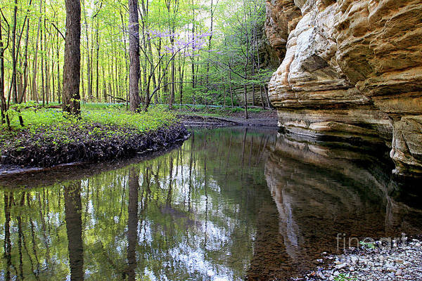 Illinois Canyon In Spring Starved Rock State Park Poster