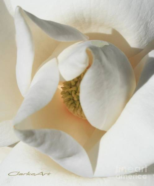 Illuminated Magnolia Macro Poster