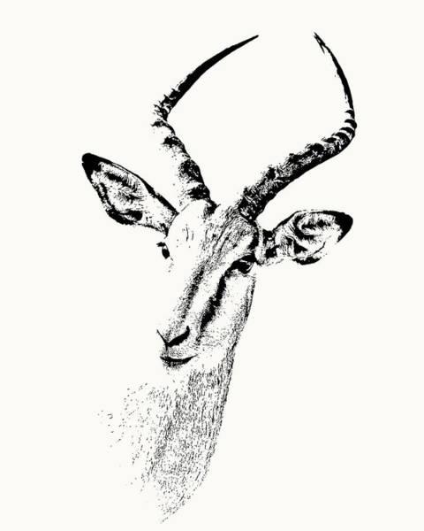 Impala Antelope Portrait Poster