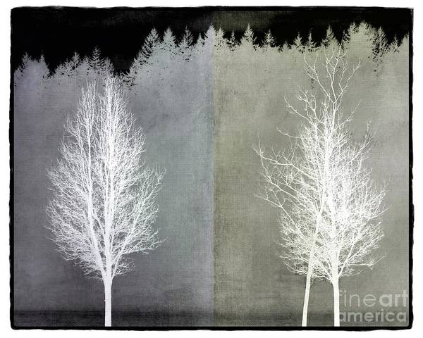 Infrared Trees With Texture Poster