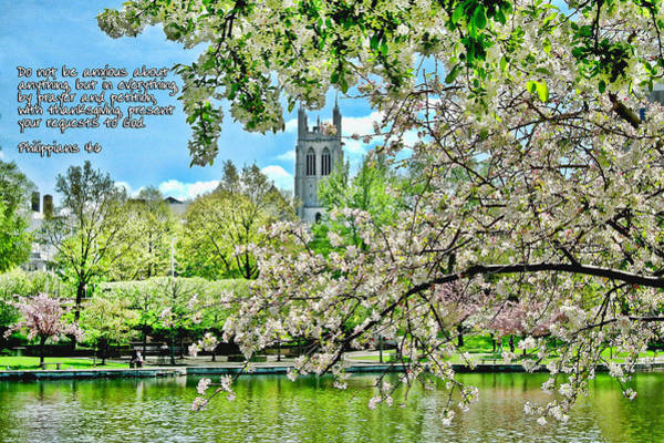 Inspirational - Cherry Blossoms Poster
