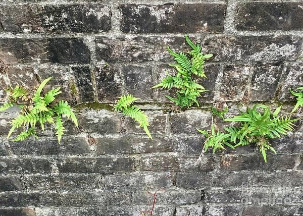 Intrepid Ferns Poster