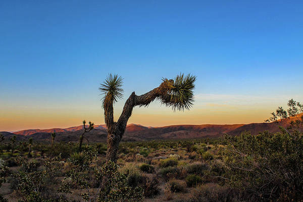 Poster featuring the photograph Joshua Tree by Alison Frank