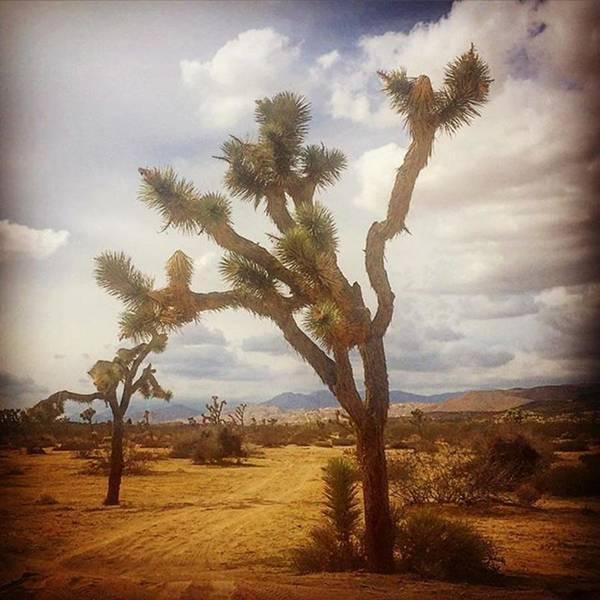 Joshua Tree. #photographer #photo Poster