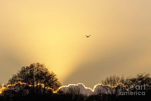 Kestrel Hunting At Sunset Poster