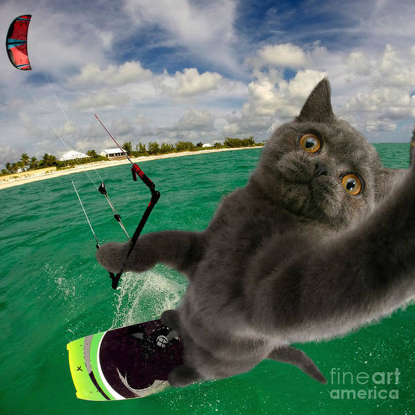 Kite Surfing Cat Selfie Poster
