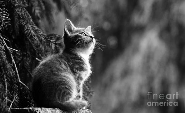 Kitten In The Tree Poster