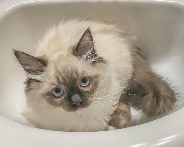 Kitty Blue Eyes Poster