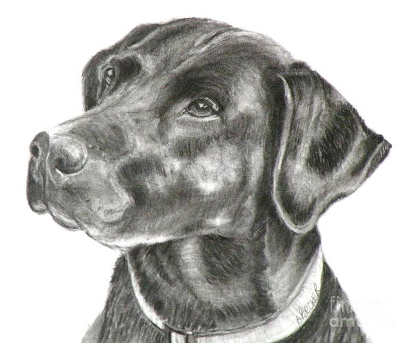 Lab Charcoal Drawing Poster