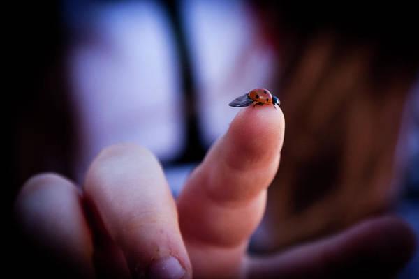 Ladybug On  Finger  Poster
