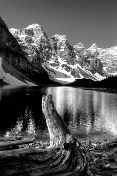 Lake Moraine Drift Wood Poster