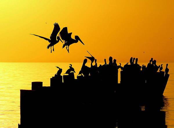 Landing In The Sunset Poster
