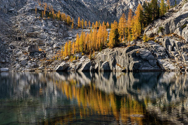 Larch Reflection In Enchantments Poster