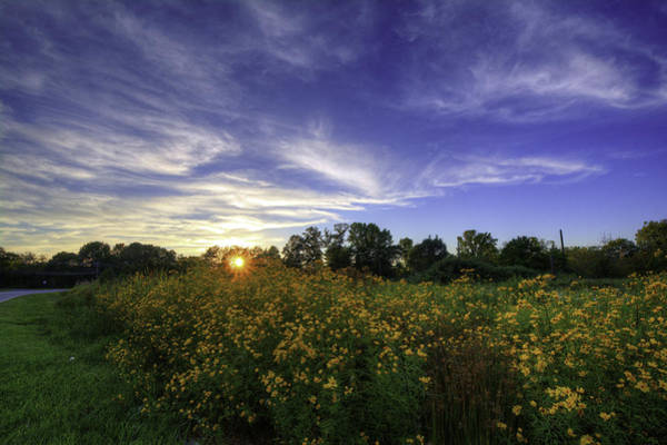 Last Rays Over The Flowers Poster