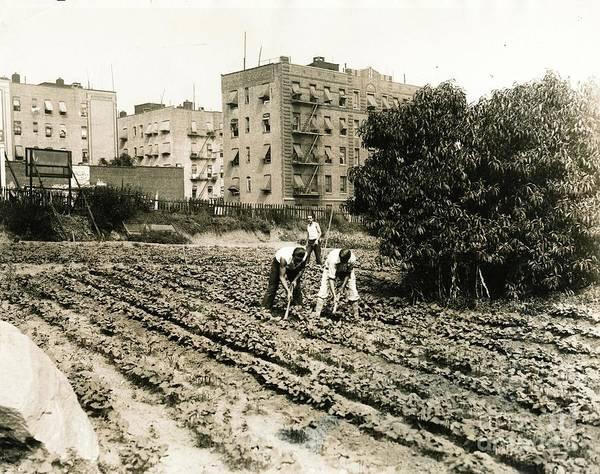 Last Working Farm In Manhattan Poster