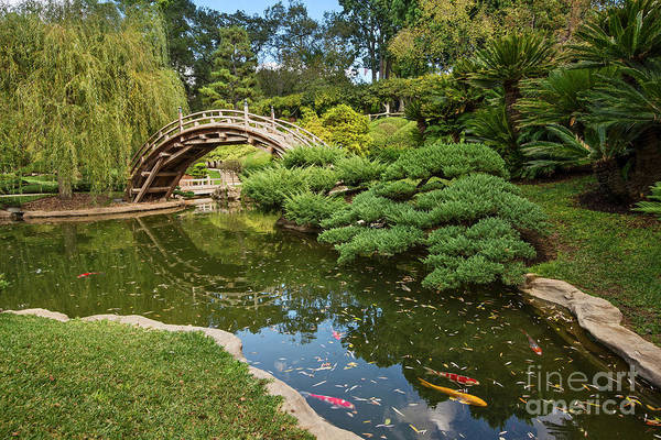 Lead The Way - The Beautiful Japanese Gardens At The Huntington Library With Koi Swimming. Poster