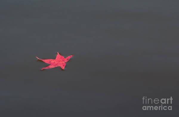 Leaf Alone Poster