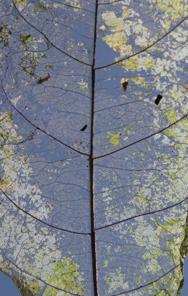 Poster featuring the photograph Leaf Structure by Debbie Cundy