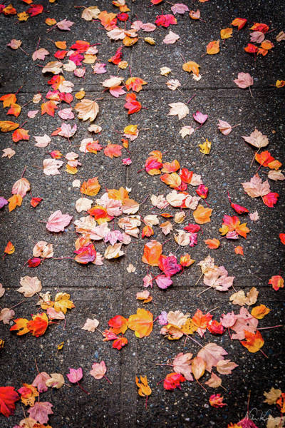 Leafy Autumn Walk Poster