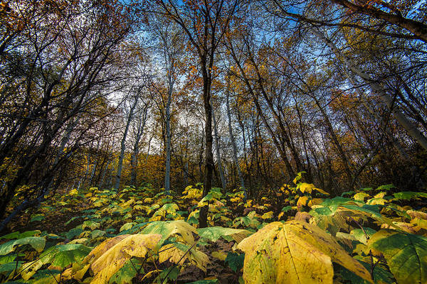 Leafy Yellow Forest Carpet Poster