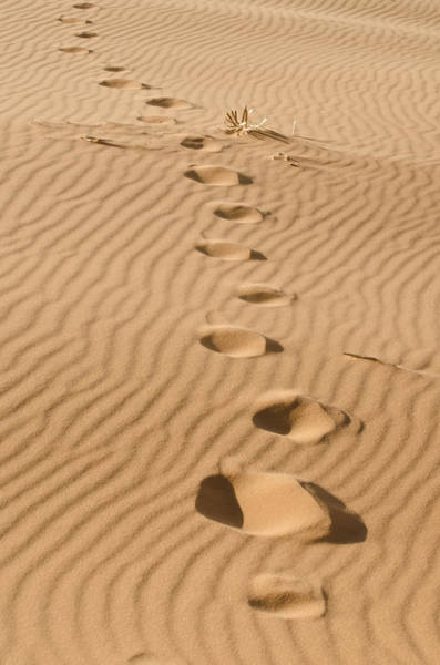 Leave Only Footprints Poster