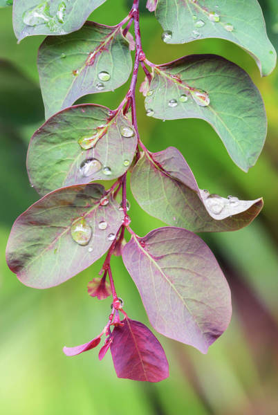 Leaves And Raindrops Poster