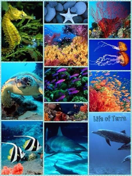 Life Of Terra Poster