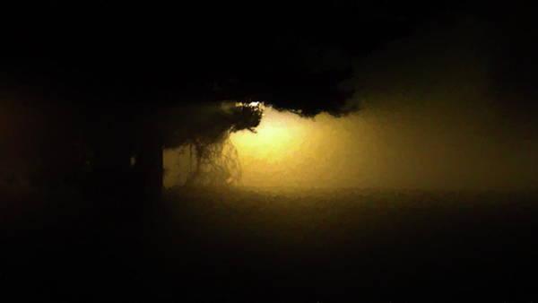 Light Through The Tree Poster