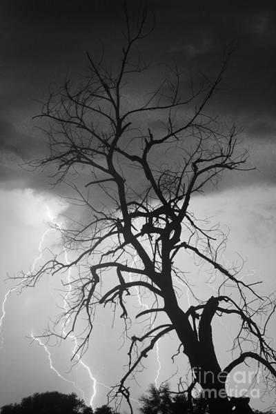 Lightning Tree Silhouette Portrait Bw Poster