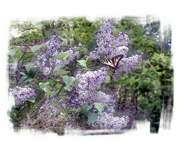 Lilacs  Fly Away Poster