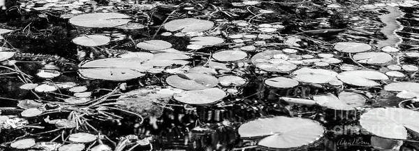 Lily Pads, Black And White Poster