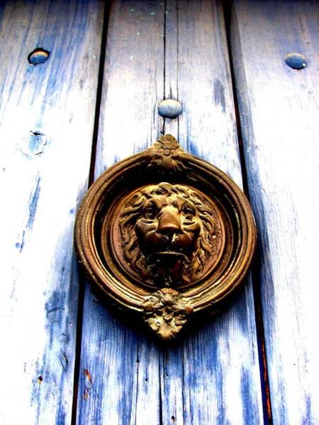 Lion Dreams Poster