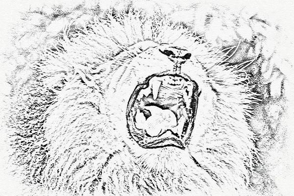 Lion Roar Drawing Poster