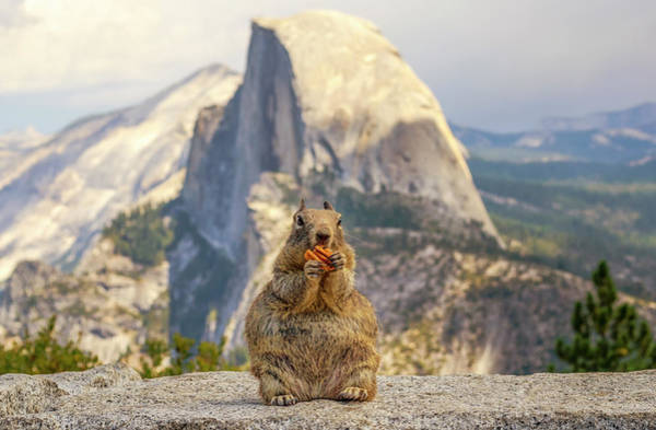 Little, Big Squirrel Poster