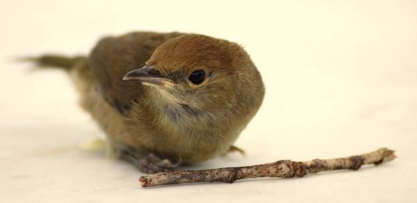 Little Bird 2 Poster
