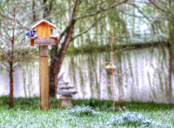 Poster featuring the photograph Little Bluebird by Sam Davis Johnson