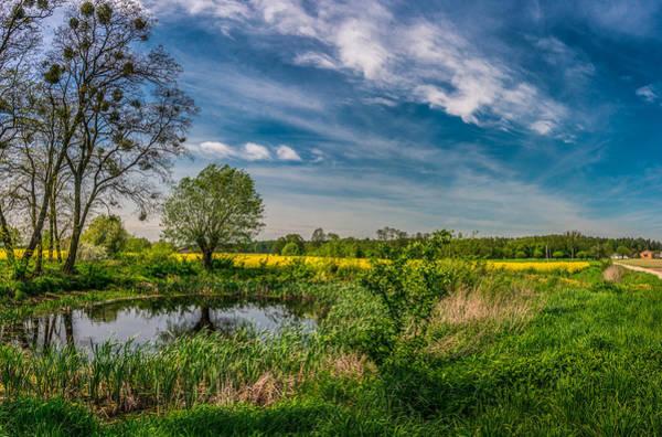 Little Pond Near A Rapeseed Field Poster