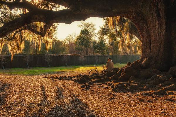 Live Oak At Audubon Park Poster