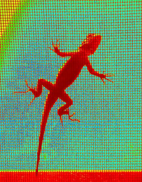 Lizard On The Screen Poster